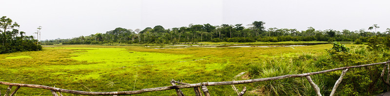 Panorama of the Lango Bai from the main deck of the Odzala Wilderness Lango Camp, Odzala-Kokoua National Park, Mboko Concession, Republic of Congo
